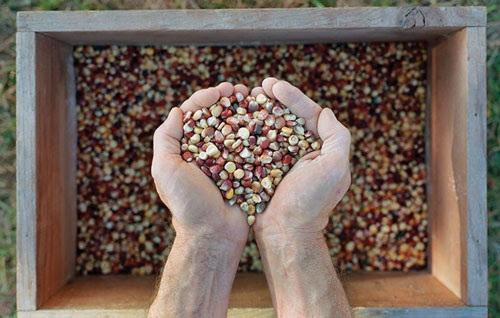 Как и где выбрать семена на посадку, чтобы урожай был высоким?