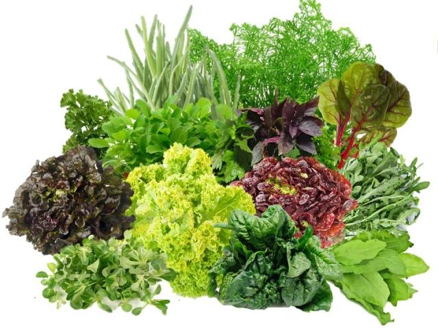 Зелень: склад і користь для організму