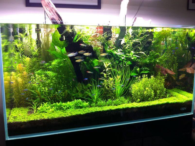 Акваріум з рибками – кращі ліки від стресу