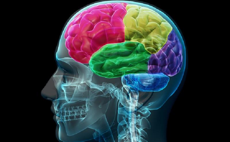 dieta-dla-mozku.jpg (106.09 Kb)