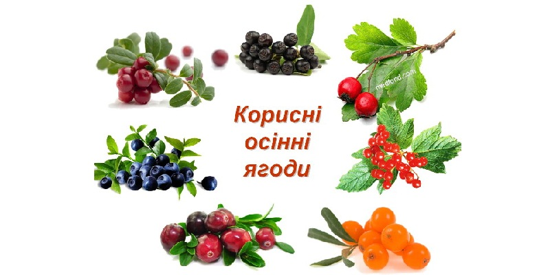 Корисні осінні ягоди