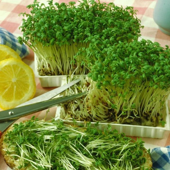 Крес-салат - джерело вітамінів