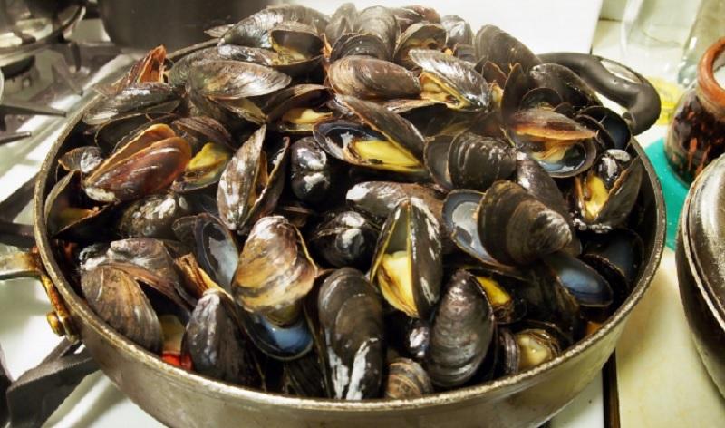 mussels.jpg (151.46 Kb)