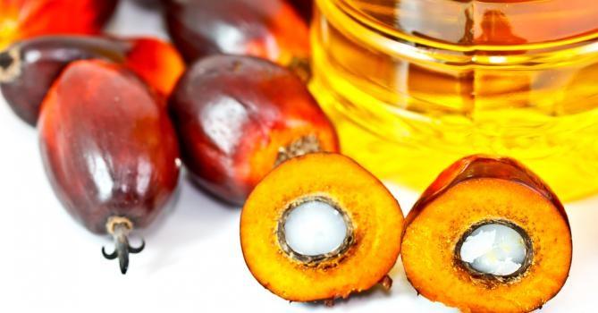 Про пальмову олію