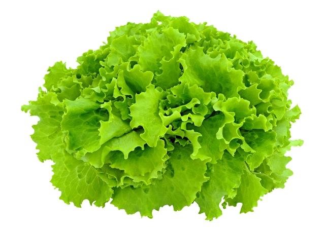 Користь листя салату для схуднення і травлення