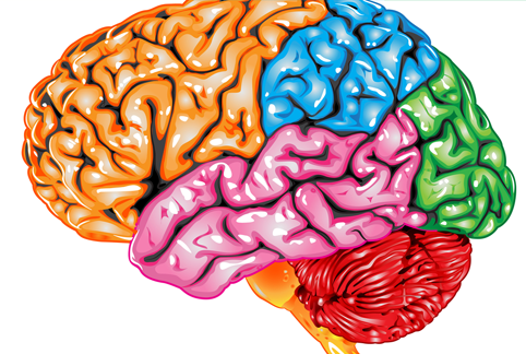 10 продуктів для покращення роботи мозку