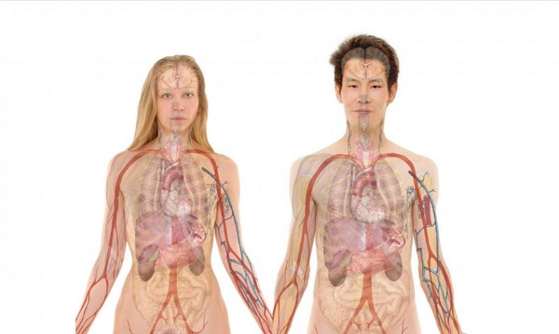 Застій жовчі: причини, симптоми та лікування